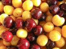Gewaschene Beeren einer süßen Kirsche Lizenzfreie Stockfotos