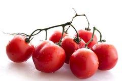 Gewaschene Tomaten Stockfotografie