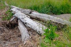 Gewaschenes Antriebholz verunreinigt den Strand auf dem Penobscot-Fluss in MA Stockbild
