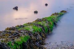 Gewaschenes Antriebholz verunreinigt den Strand auf dem Penobscot-Fluss in MA Stockfotografie