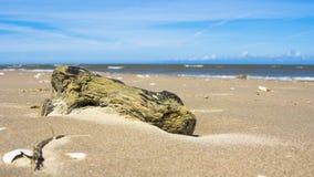 Gewaschenes Treibholz auf dem sandigen Strand in Ostsee Lizenzfreies Stockfoto