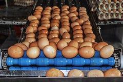 Gewassen eieren op een blauwe industriële lijn Royalty-vrije Stock Afbeelding