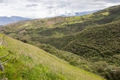 Gewassen en inheems bos in de hooglanden van Ecuador Royalty-vrije Stock Fotografie