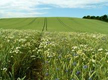 gewassen gebied royalty-vrije stock afbeelding