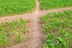 Gewassen op een Landbouwbedrijf van Sussex Royalty-vrije Stock Foto's