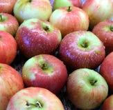 Gewassen rode en groene rijpe appelen met waterdalingen Royalty-vrije Stock Foto
