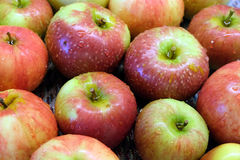 Gewassen rode en groene rijpe appelen met waterdalingen Royalty-vrije Stock Fotografie