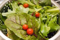 Gewassen Salade Royalty-vrije Stock Fotografie