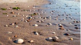 Gewassen shells in golvende golven langs de zomer bij Nederlands Nr stock fotografie