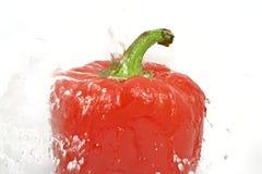 Gewassen Spaanse peper Stock Foto