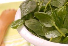 Gewassen spinazie stock afbeeldingen