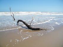 Gewassen woon op strand Stock Afbeelding