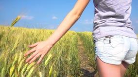 Gewassenwijfje wat betreft graangewassengras stock footage