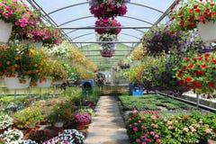 Gewächshaus mit Blumen Stockbilder