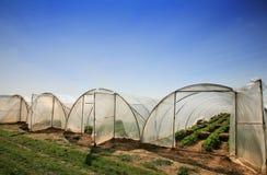 Gewächshäuser mit Erdbeeren Lizenzfreies Stockfoto