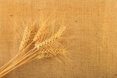 Gewebe aus Jute mit neun Weizenähren Stockbild