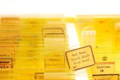 Gewebeproben auf einem Plättchen in einem Kasten Lizenzfreies Stockbild