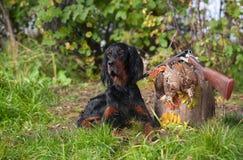 Gewehrhund nahe zur Schrotflinte und zur Trophäe, draußen Stockfotos