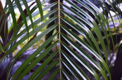 Gewellt, dünne tropische Blätter aufwärts zeigend Lizenzfreie Stockfotografie