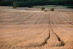 Gewellte Felder, Märchenmuster Stockbilder