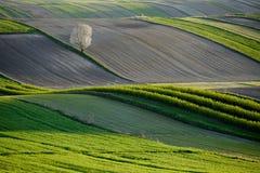 Gewellte Felder, Märchenmuster stockfoto