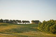 Gewellte Felder in Toskana bei Sonnenaufgang Stockfotos