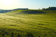 Gewellte Felder in Toskana bei Sonnenaufgang Lizenzfreie Stockbilder