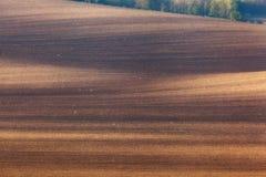 Gewellte Grünfelder Sonnige Hügel des gestreiften Rollens bei Sonnenuntergang Stockbilder