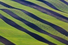 Gewellte Grünfelder Sonnige Hügel des gestreiften Rollens bei Sonnenuntergang Stockfotografie