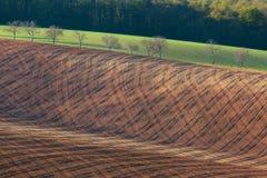 Gewellte Grünfelder Sonnige Hügel des gestreiften Rollens bei Sonnenuntergang Stockfoto