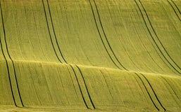 Gewellte Märchenfrühlingslandschaft mit Feldern des Weizens Stockbild