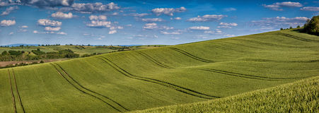 Gewellte Märchenfrühlingslandschaft mit Feldern des Weizens und des Himmels Lizenzfreie Stockfotografie
