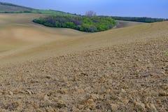Gewellte Märchenlandschaft mit Bäume in einer Mitte des Feldes Ist ein grünes Feld voll der Weizenanlagen Moravian Toskana, Süd-M Stockfotos