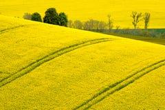 Gewellte Wiesenfrühlingslandschaft in Süd-Moray Lizenzfreies Stockfoto