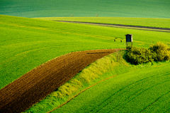 Gewellte Wiesenfrühlingslandschaft in Süd-Moray Stockfoto