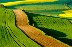 Gewellte Wiesenfrühlingslandschaft in Süd-Moray Stockfotos