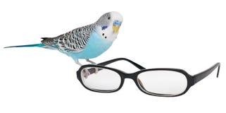 Gewellter Papagei Lizenzfreie Stockfotos
