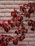 Gewellter Stammweinberg auf der Hintergrundwand Stockfotos