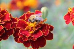 Gewesen in der Blume stockbild