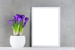 Geweven achtergrond met bloeiende purpere krokussen in wit p Royalty-vrije Stock Foto's