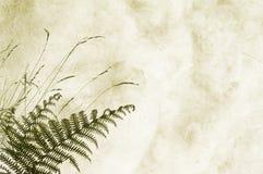Geweven achtergrond met fernery - ruimte voor tekst Royalty-vrije Stock Foto