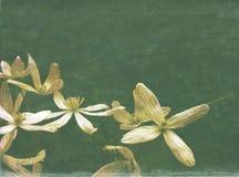 Geweven achtergrond met flora Stock Fotografie