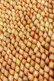 Geweven achtergrond van hoofden van kleine gele uien voor het planten Stock Foto