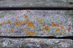 Geweven achtergrond van oude grijze langzaam verdwenen raad omvat met paddestoel en mos stock foto's