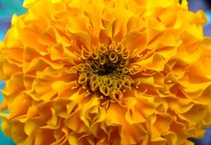 Geweven goudsbloembloem Royalty-vrije Stock Fotografie