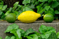 Geweven grijze steenachtergrond Als achtergrond met citroen en kalk Stock Foto's
