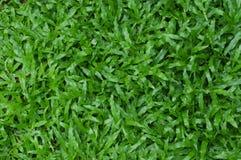 Geweven het gras van het tapijt stock fotografie
