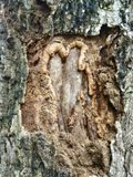 Geweven hout Royalty-vrije Stock Foto