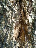 Geweven hout Stock Foto