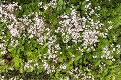 Geweven kleine bloemen in bloembed Stock Afbeelding